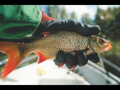 В поисках золотой рыбки