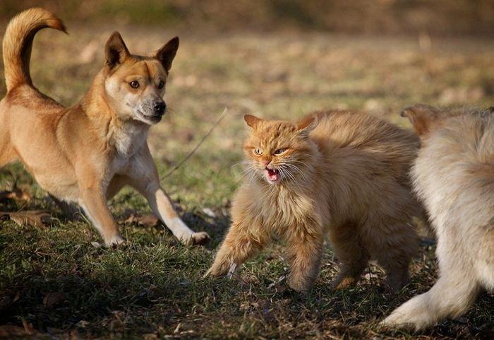 Кошачий триллер (6 фото)