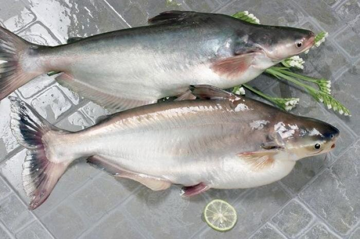 Руководство по морепродуктам: пангасиус (26 фото)
