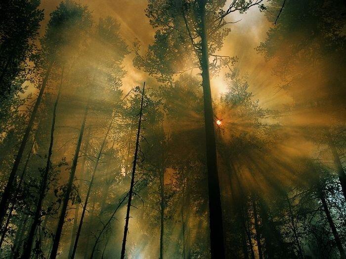 Лучшие фотографии от National Geographic за 2012 год (32 фото)