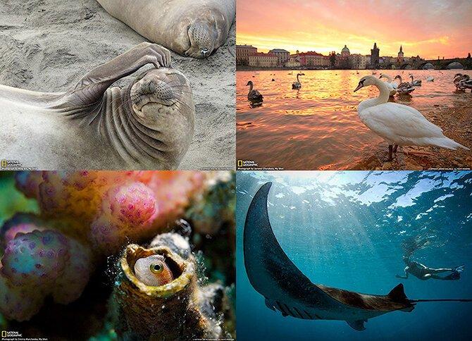 Лучшие фотографии National Geographic за апрель 2013 (31 фото)