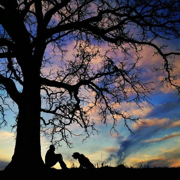 Один год из жизни одинокого дуба (30 фото)