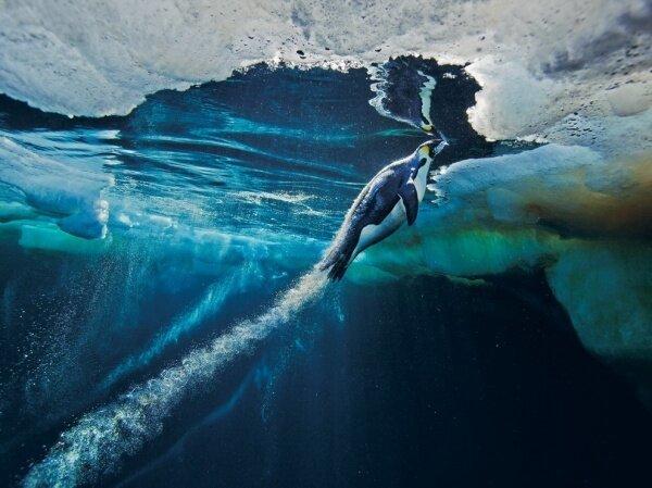 Шедевры National Geographic (45 фото)