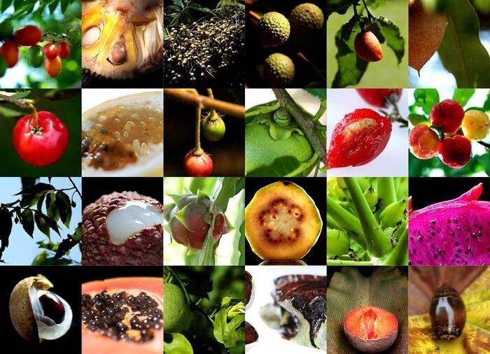 Полезные экзотические фрукты (43 фото)