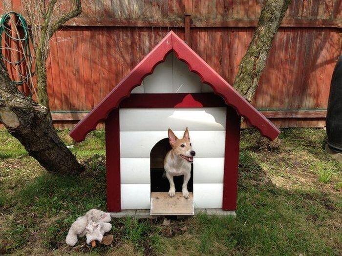 Будка для собаки своими руками (13 фото)