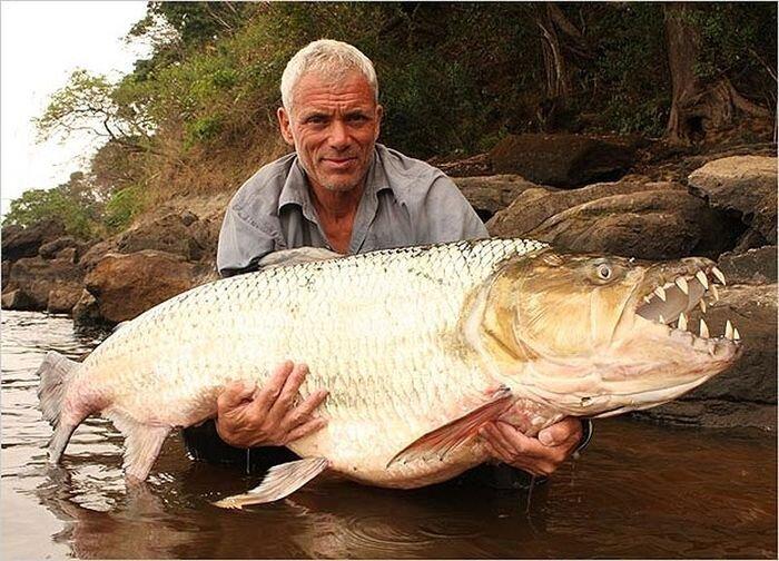 Удивительные речные рыбы (20 фото)