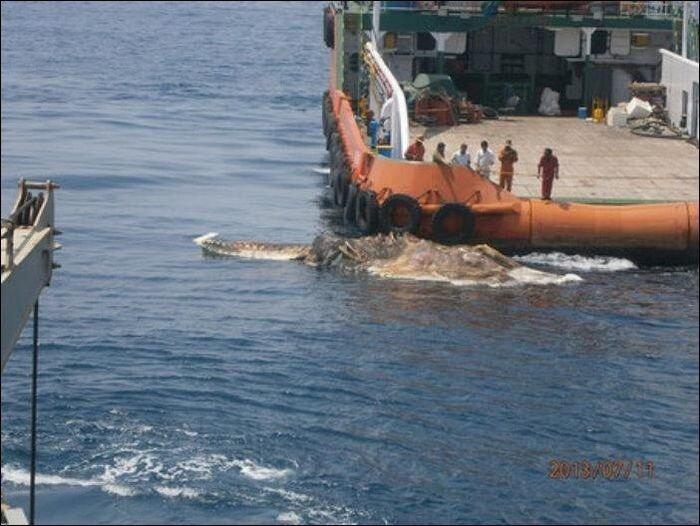 В Персидском заливе обнаружили странное существо (4 фото)