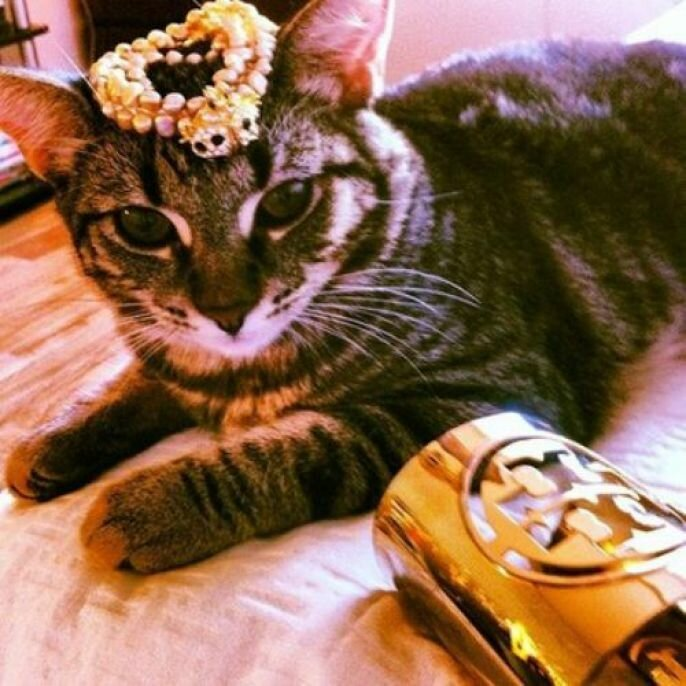 Instagram Cats Is Every Cat Lovers Dream  от pab за 19 sep 2012
