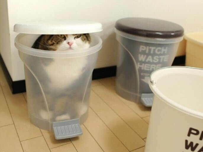 If I Fits, I Sits. Cats In Strange And Awkward Places