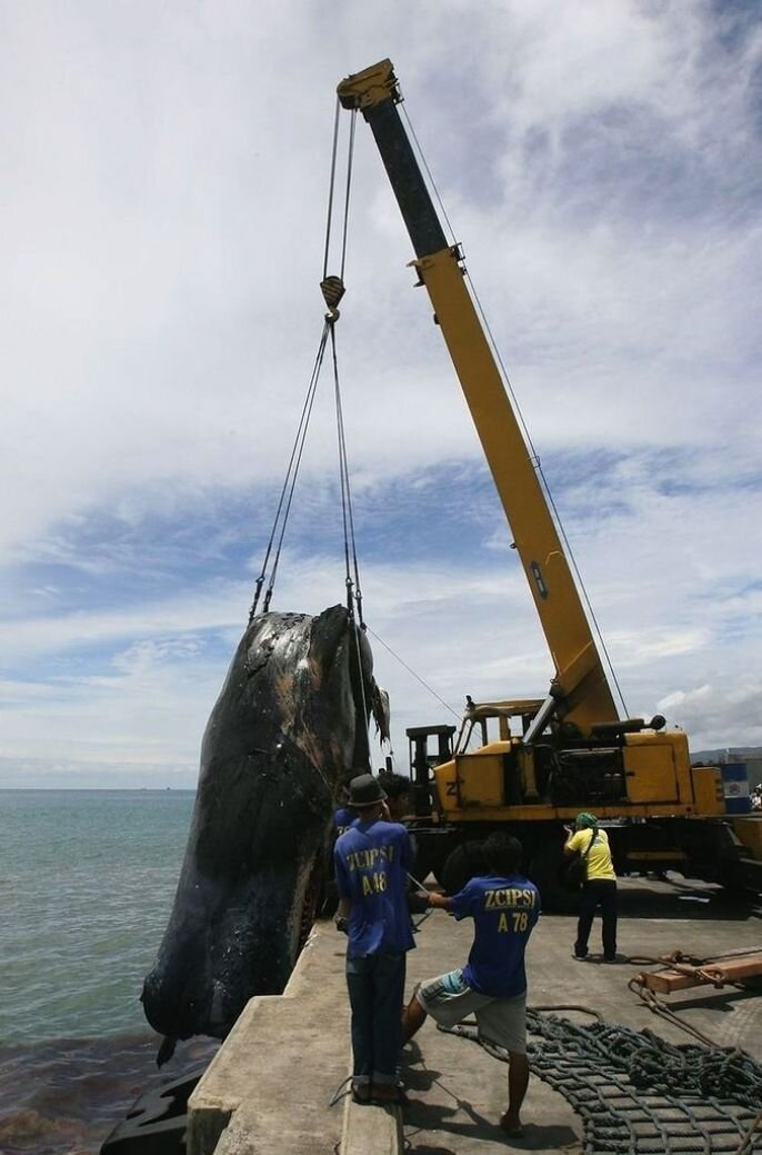 Natural Death: Giant Whale Found Dead
