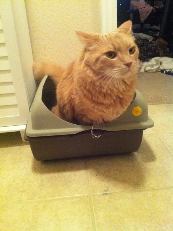 Hilarious Derpy Cats of Tumblog от Kaye за 24 sep 2012