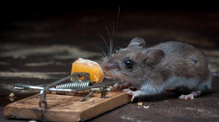 Smart Mouse, Beats Mouse Trap  от Veggie за 25 sep 2012