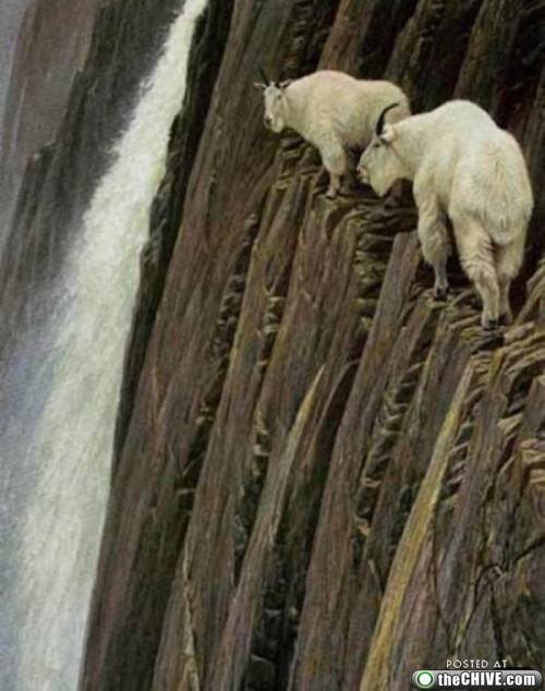 Mountain Goats Know Magic! These Are Not Photoshopped