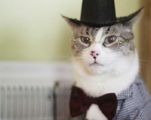 Cat-urday