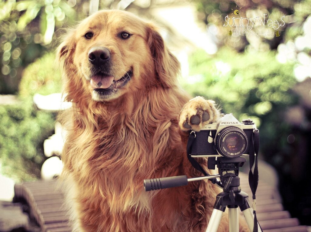 Talented Teen Shoots Adorably Creative Dog Portraits