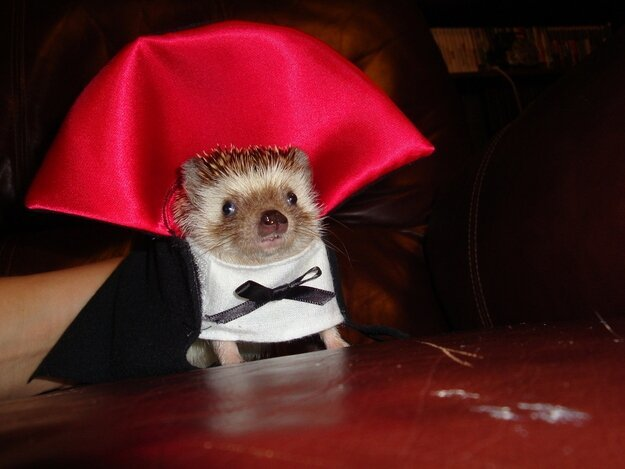 Have a Hedgehog Halloween!