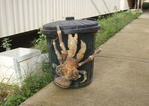 WTF Weird Creepy Animals