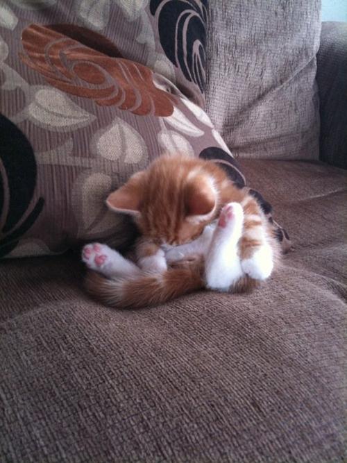 The Most Awkward Cat Sleeping Positions от Veggie за 22 oct 2012