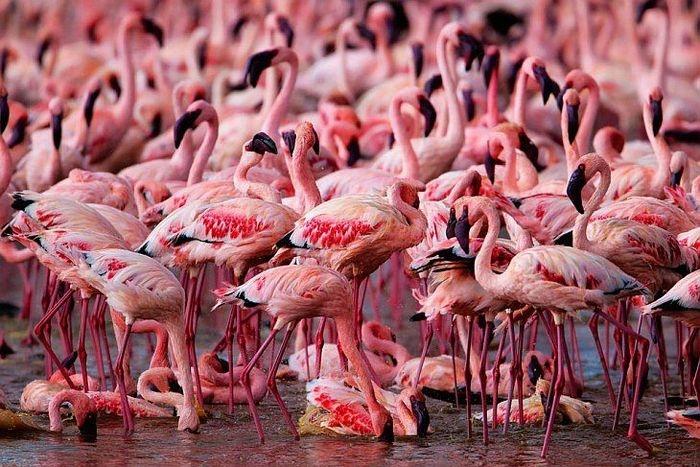 Lake of Million Pink Flamingos