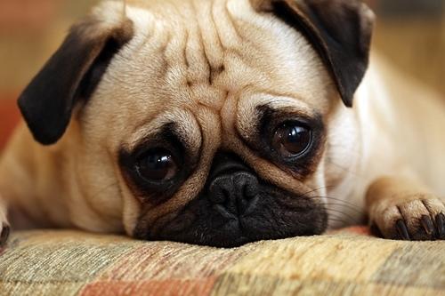 World's Saddest Pups