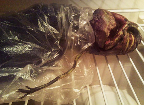 Alien found dead in Russian freezer!!! OMFG! от Veggie за 25 oct 2012