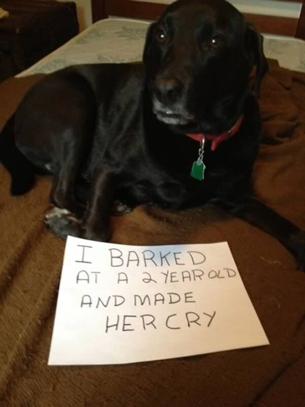 Hilarious Dogshaming Signs