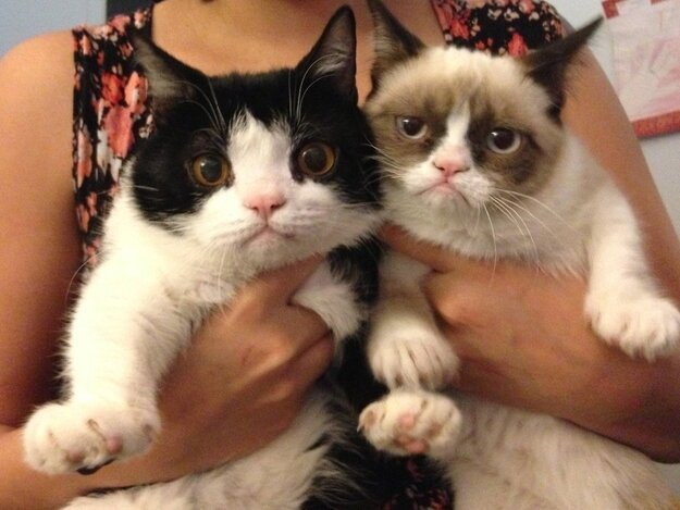 Meet Pokey: Grumpy Cat's Slightly Less Grumpy Brother