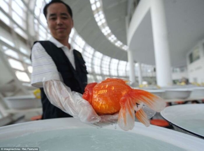 International Goldfish Championship in China