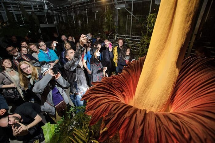 The World's Largest Flower