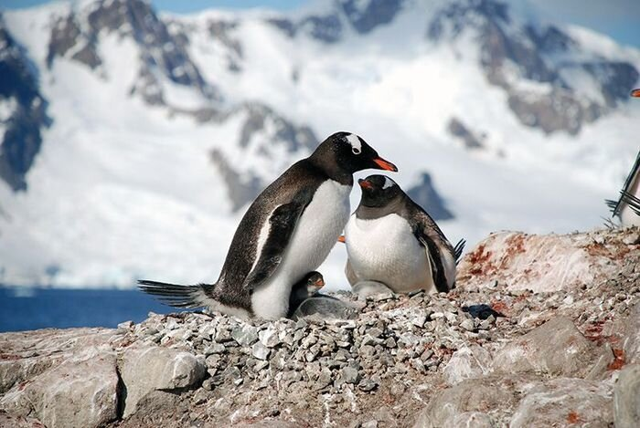 One Day in Antarctica  от Helen за 26 nov 2012
