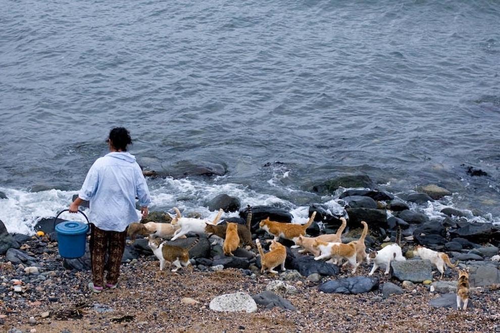 Cat Lady Heaven On An Island In Japan