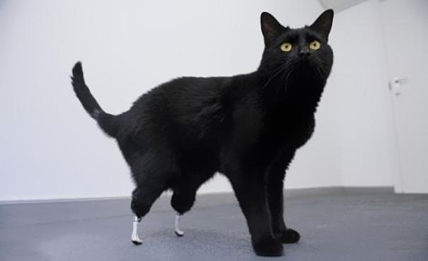 Animal Prosthetics от Marinara за 26 nov 2012