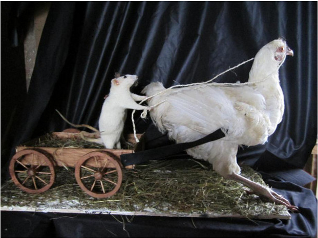 The Wonderful World of Taxidermy