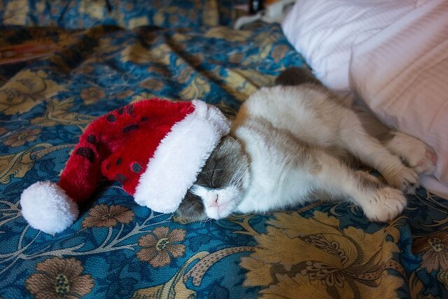 Grumpy Cat Does the Santa in NYC