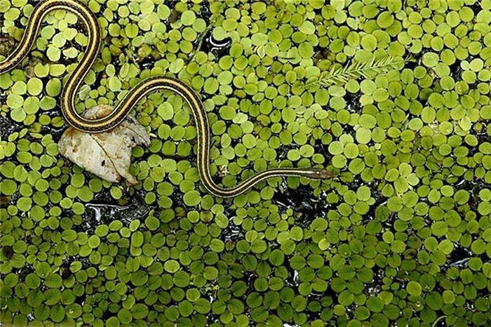 Animals With Weird Mating Behavior