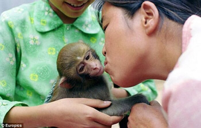 Wife Who Breastfeeds Monkeys