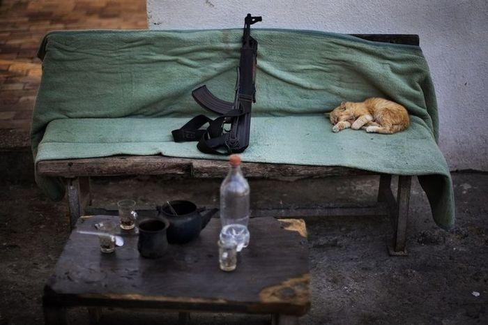Best Animal Photographs 2012