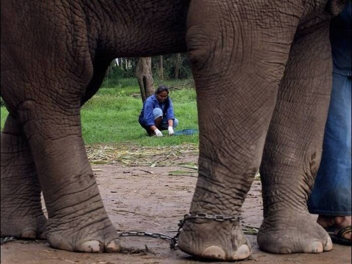 Elephant Coffeemaker