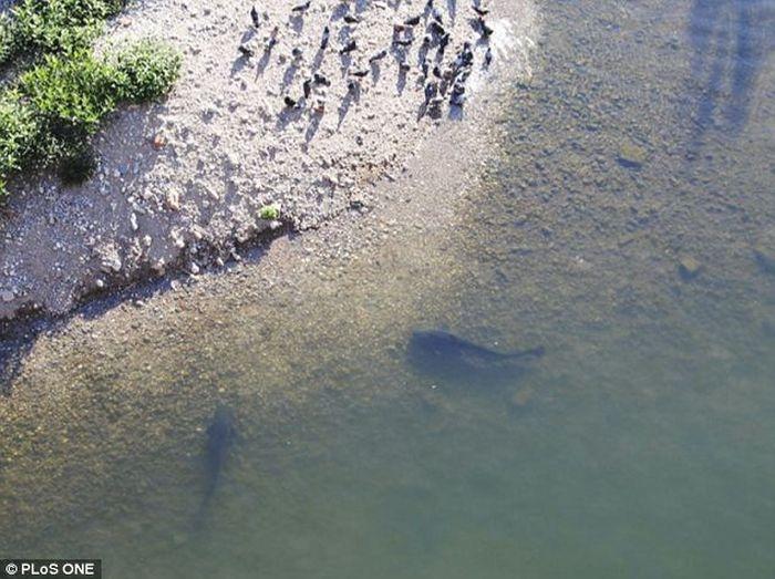 Catfish Hunting