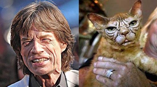 Rock Idol Reincarnation (As Cats!)