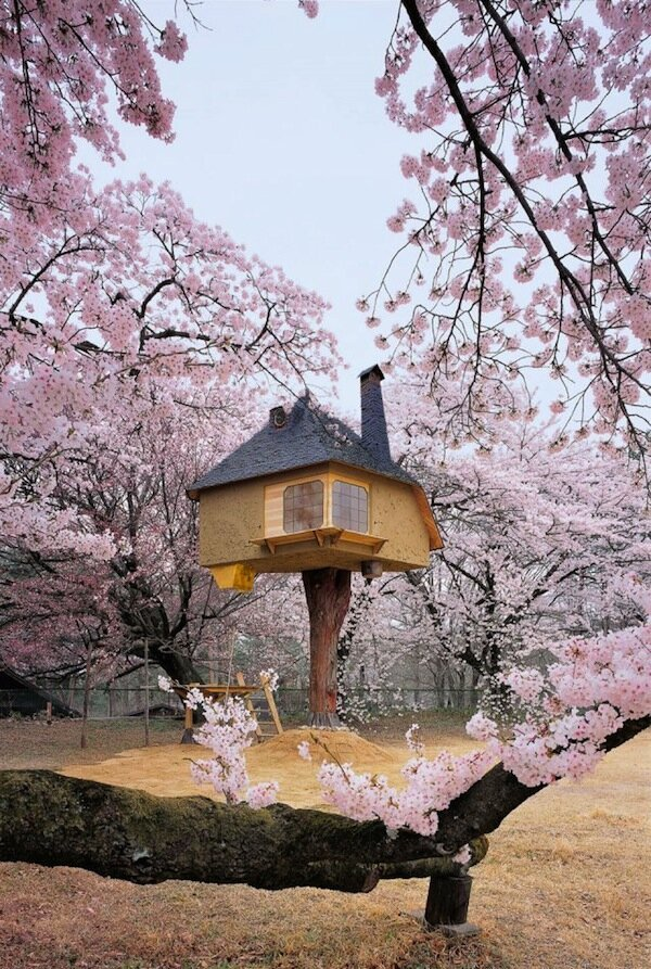 Dream Treehouses... for Adults!