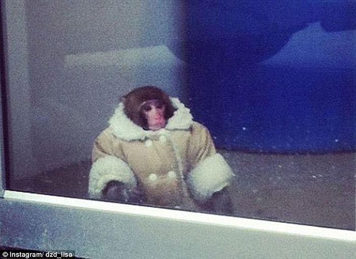 Trendy Monkey