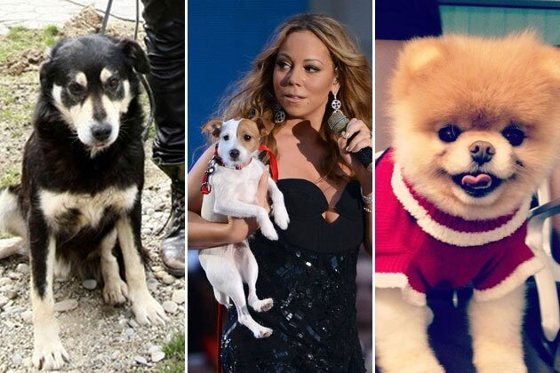 Celebrity Dogs That Are Definitely Having a Better Christmas Than You
