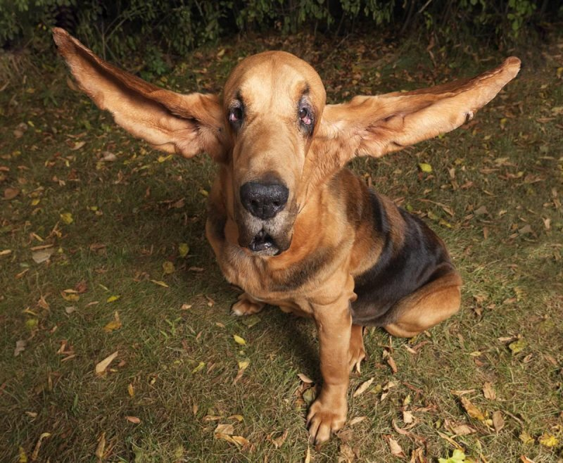 Dogs with Funny Ears