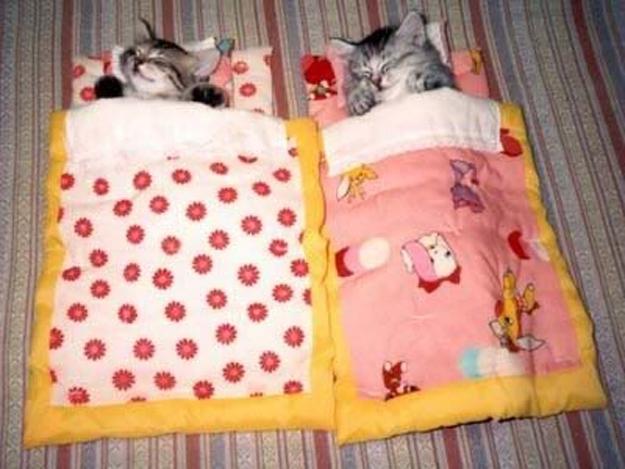 Cats in Tiny Bedzzzzzz