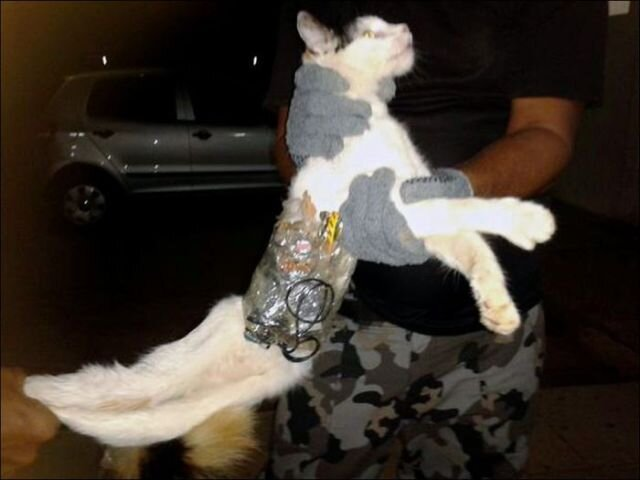 Prison Cat Attempts Breakout