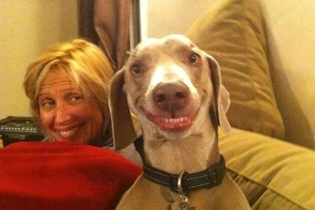 Happy Dogs = Instant Happiness for YOU.
