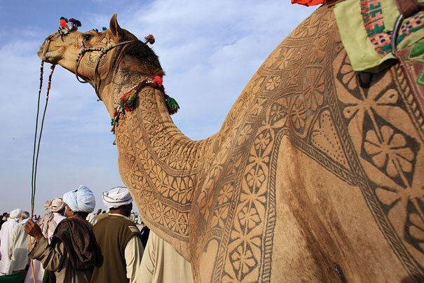 Amazing Camel Hair Art at Bikaner Camel Festival