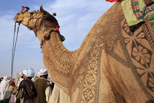 Amazing Camel Hair Art at Bikaner Camel Festival