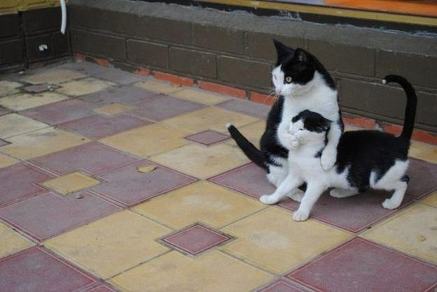 Shushing Cats Everywhere